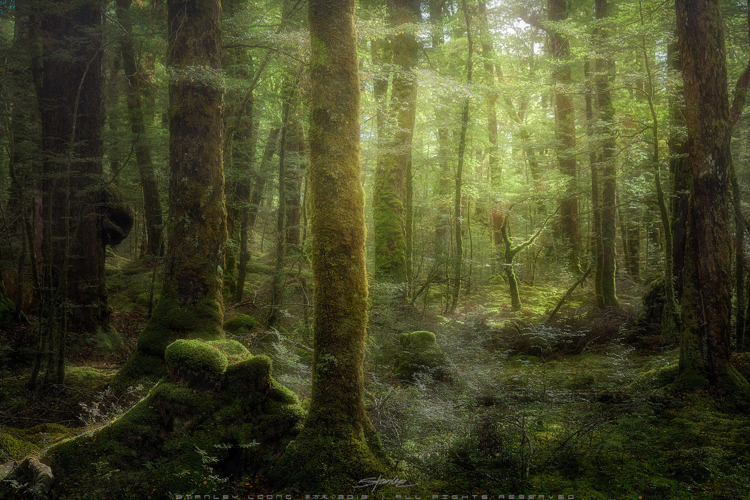 Beech Forest by Stanley Loong