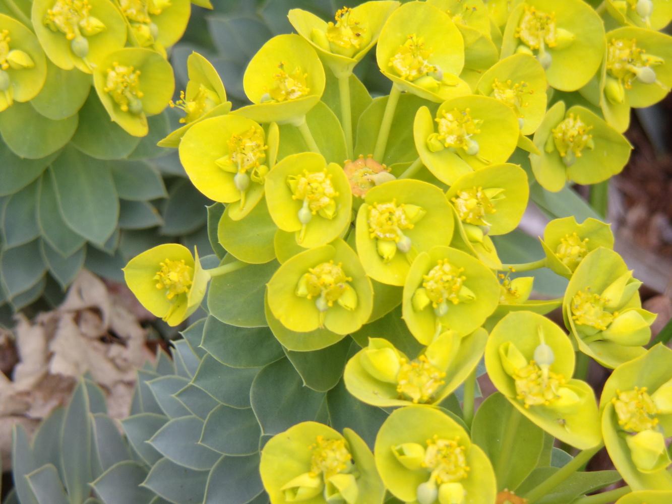 flower sunshine by Tammy Higgins