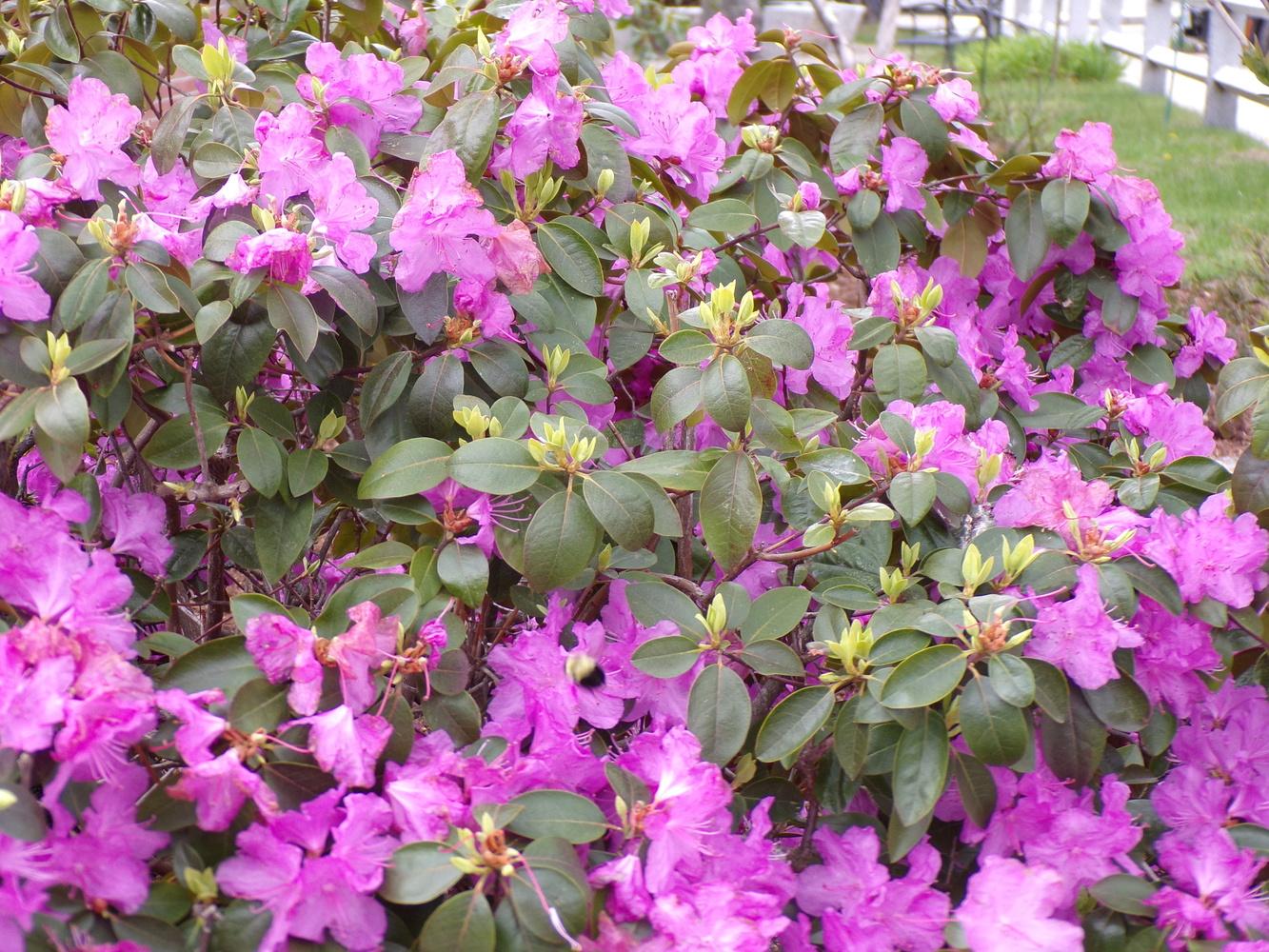 Pretty pinks in Spring by Tammy Higgins