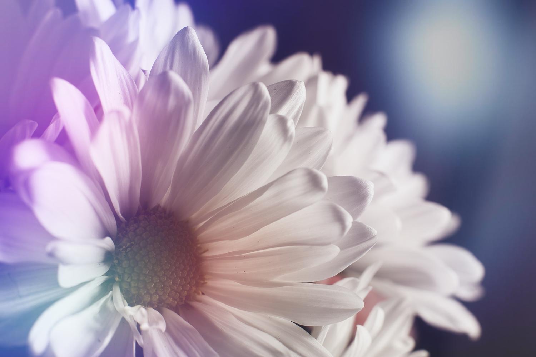 Pale Flowers by Joe Burdick