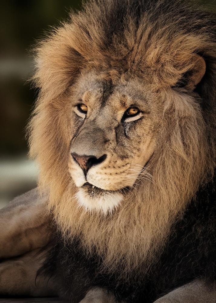 King by Joe Burdick