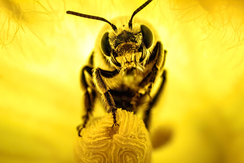 Pollinated by Joe Burdick