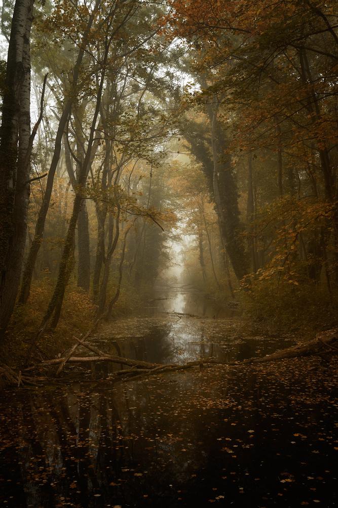 in the woods by Tomas Haluska