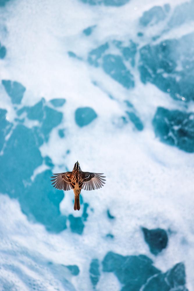 Atlantic Flyer by Bruce Grant