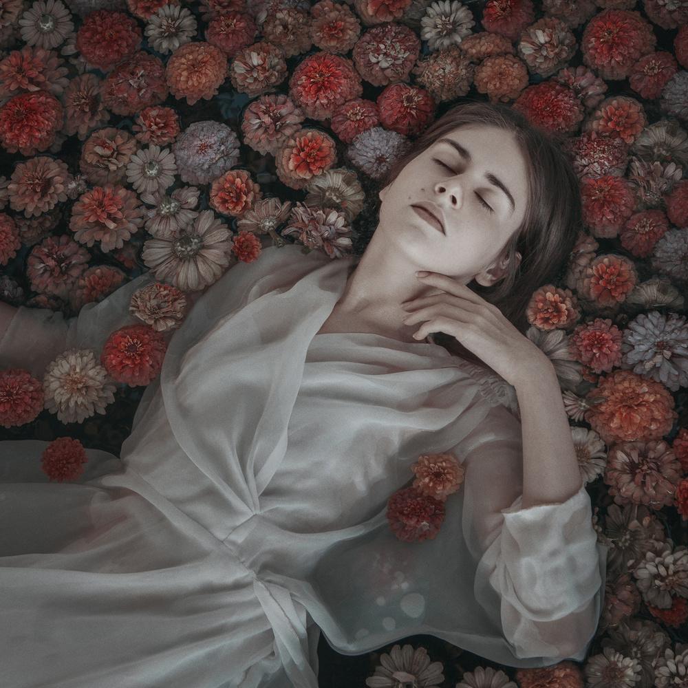 Where The Whild Chrysanthemum Grow by Teodora Dimitrova