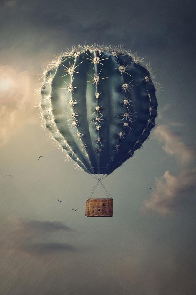 The Flight by Teodora Dimitrova