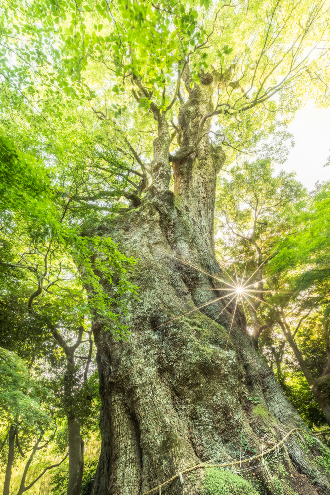 The sacred tree by Ko Eto