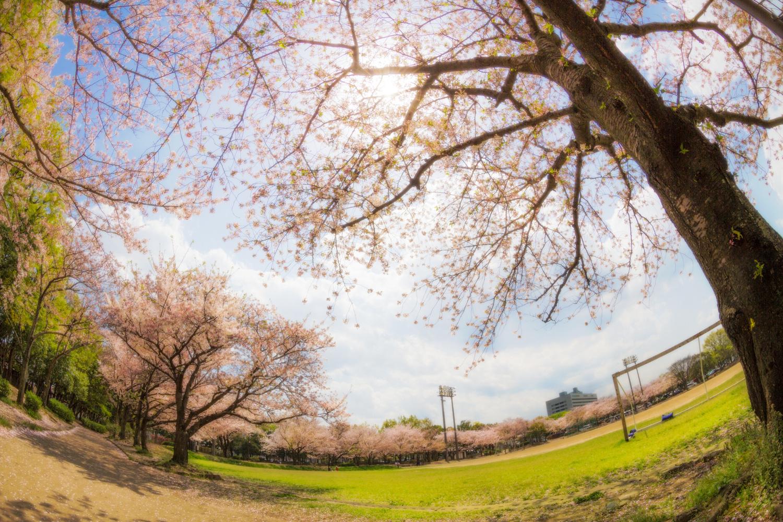 Sakura Park by Ko Eto