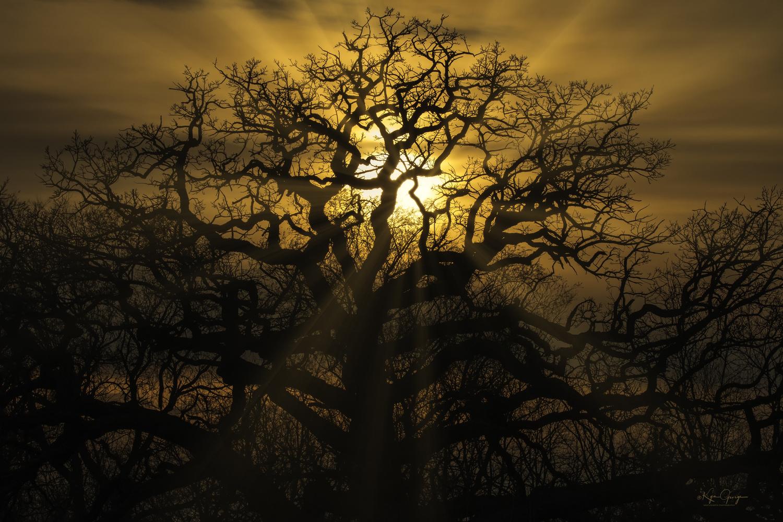 Lit by twilight by Kym George