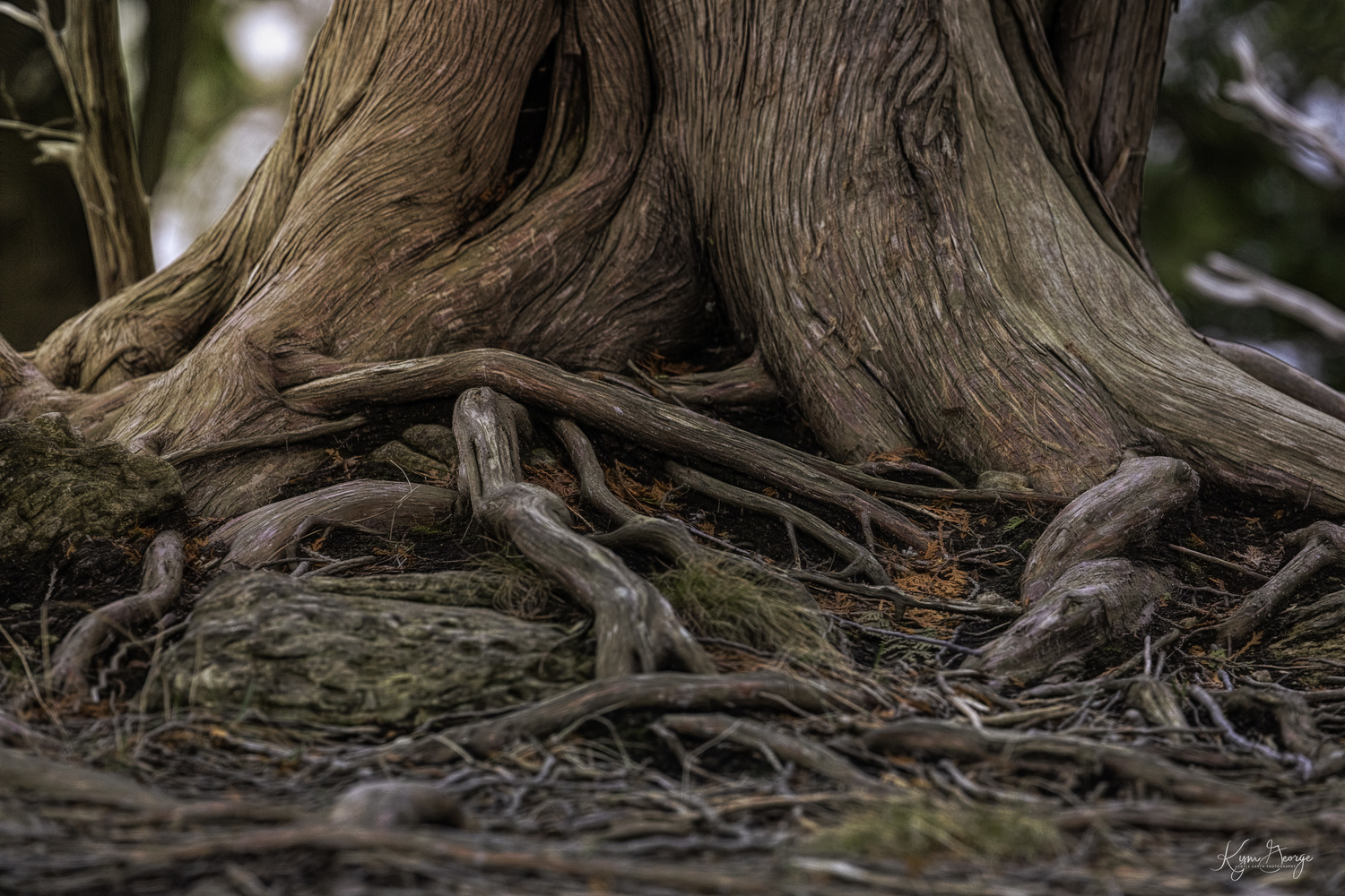 Natures Uniqueness by Kym George