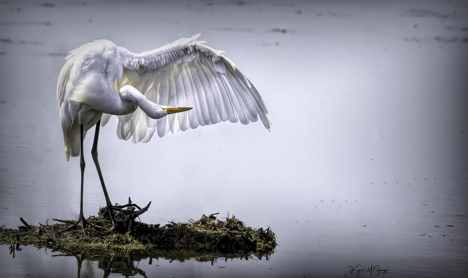 Angel Wings by Kym George