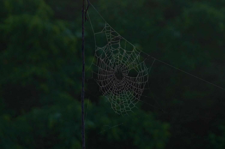 Simple Spider Web by Adam Morton