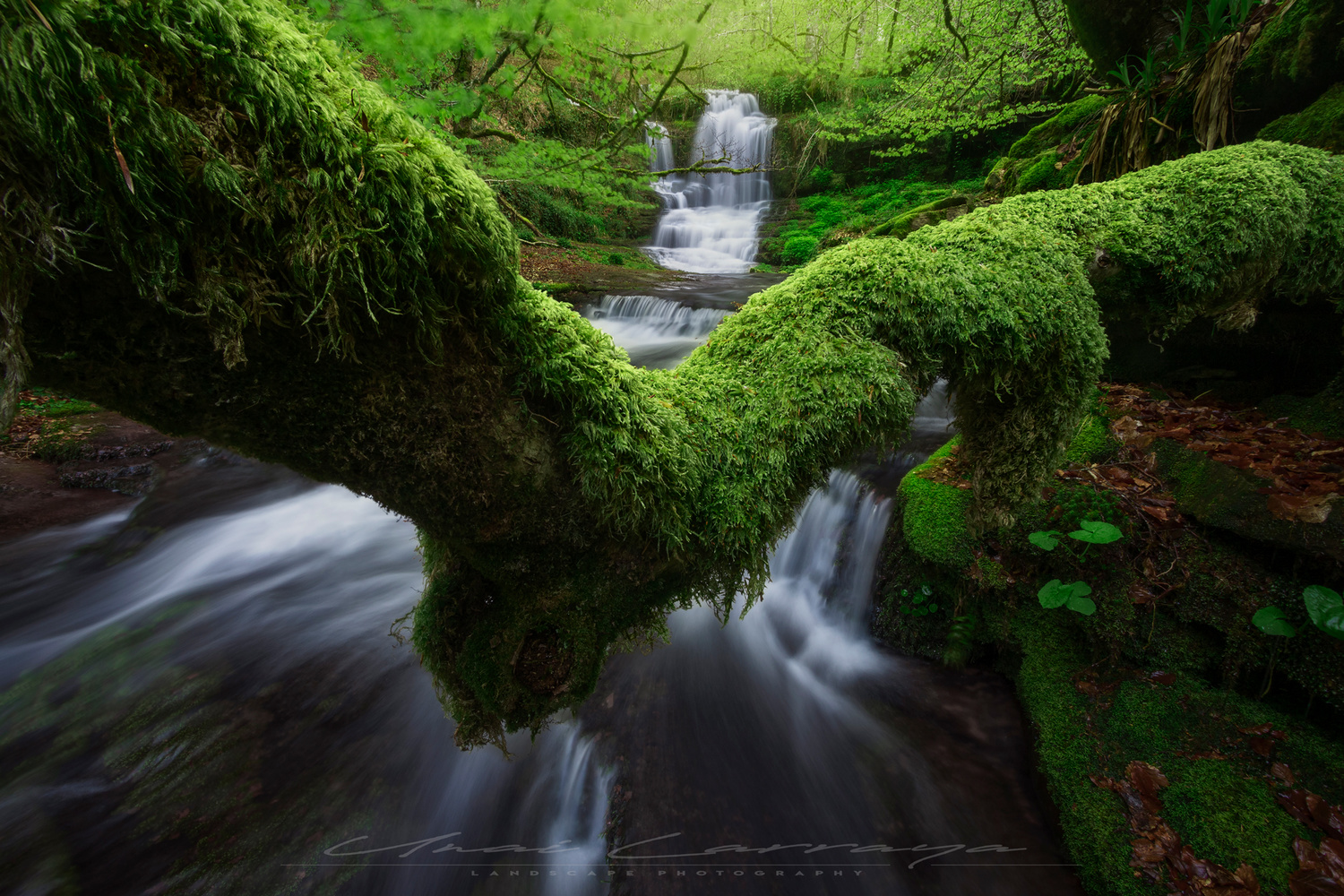 Covered in moss by Unai Larraya