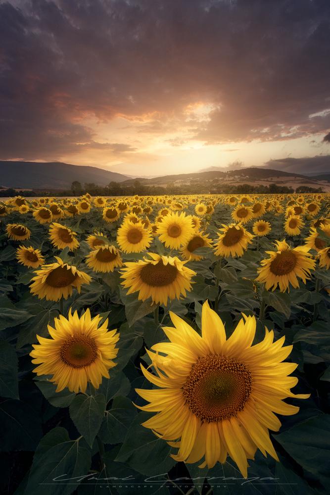 Summer days by Unai Larraya