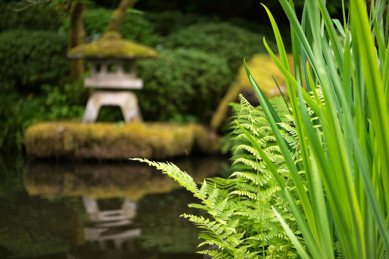 a japanese garden zen moment by Wasim Muklashy