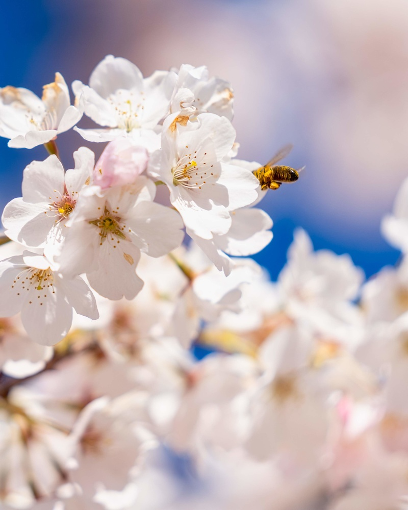 bee safe. by Wasim Muklashy