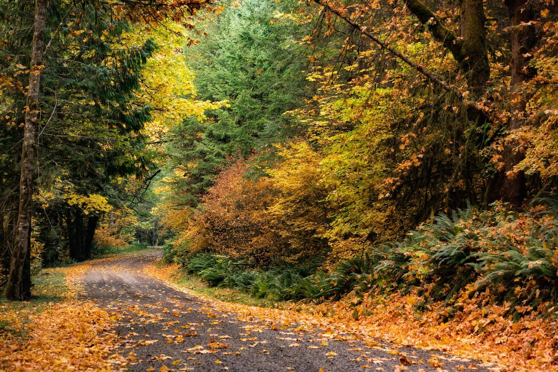 fall roads by Wasim Muklashy