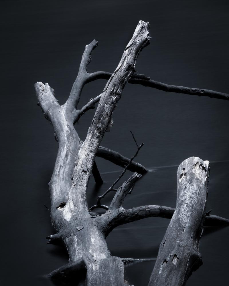 Dead Tree Submerged by Kaz van Kooten