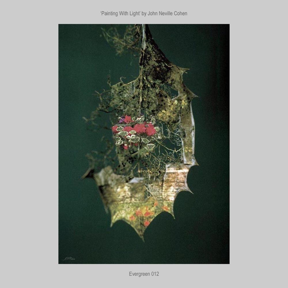 Evergreen by John Neville Cohen