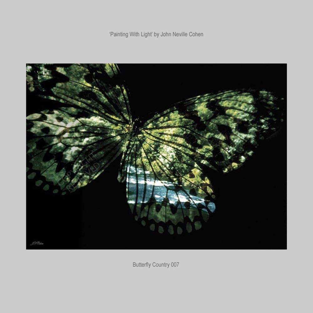 Butterfly Country by John Neville Cohen