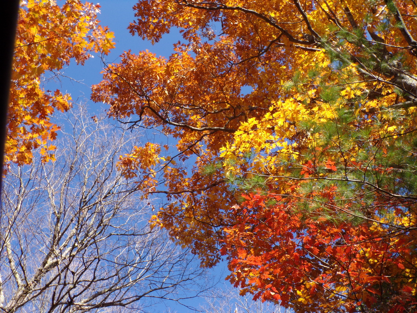 Autumn UP by tammy higgins