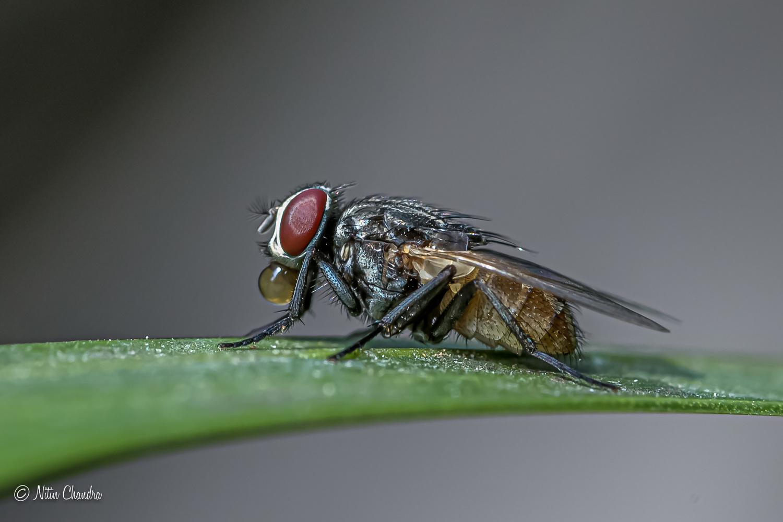 Bubbly Fly :) by Nitin Chandra