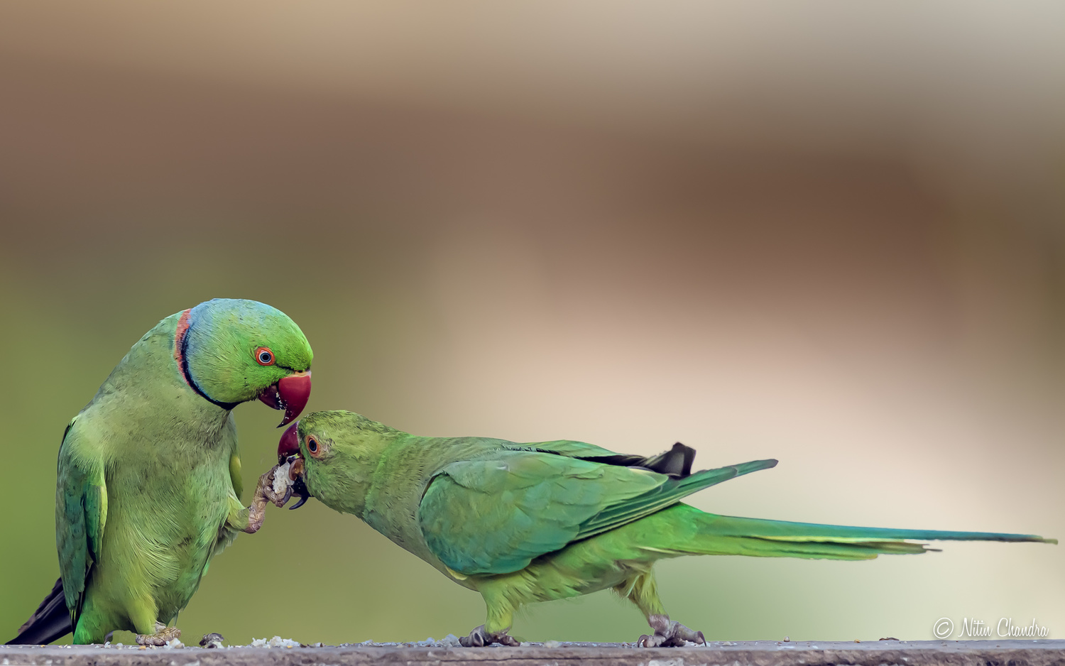 Love Is...Sharing the only piece of bread you have :) by Nitin Chandra
