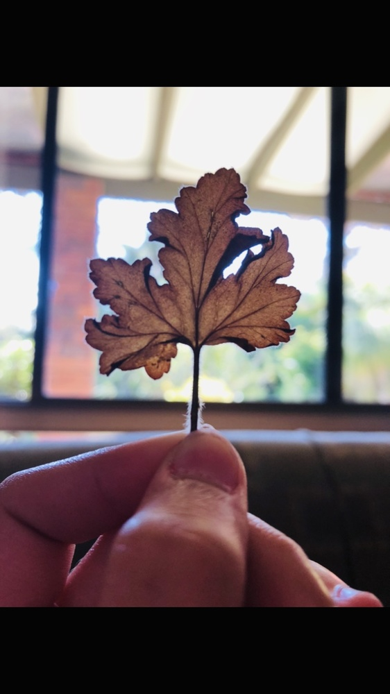 My little autumn leaf by Lacey Art