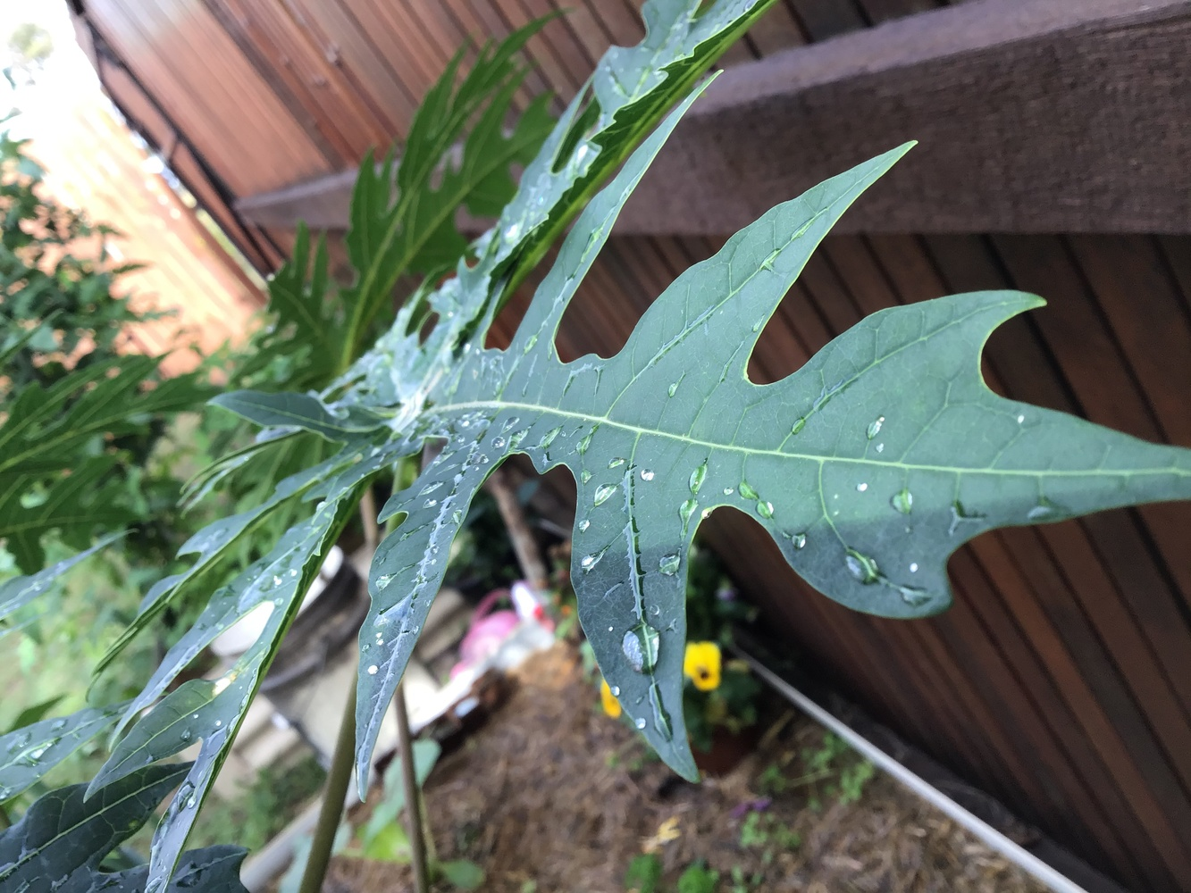 Raindrops on the leaf by Lacey Art