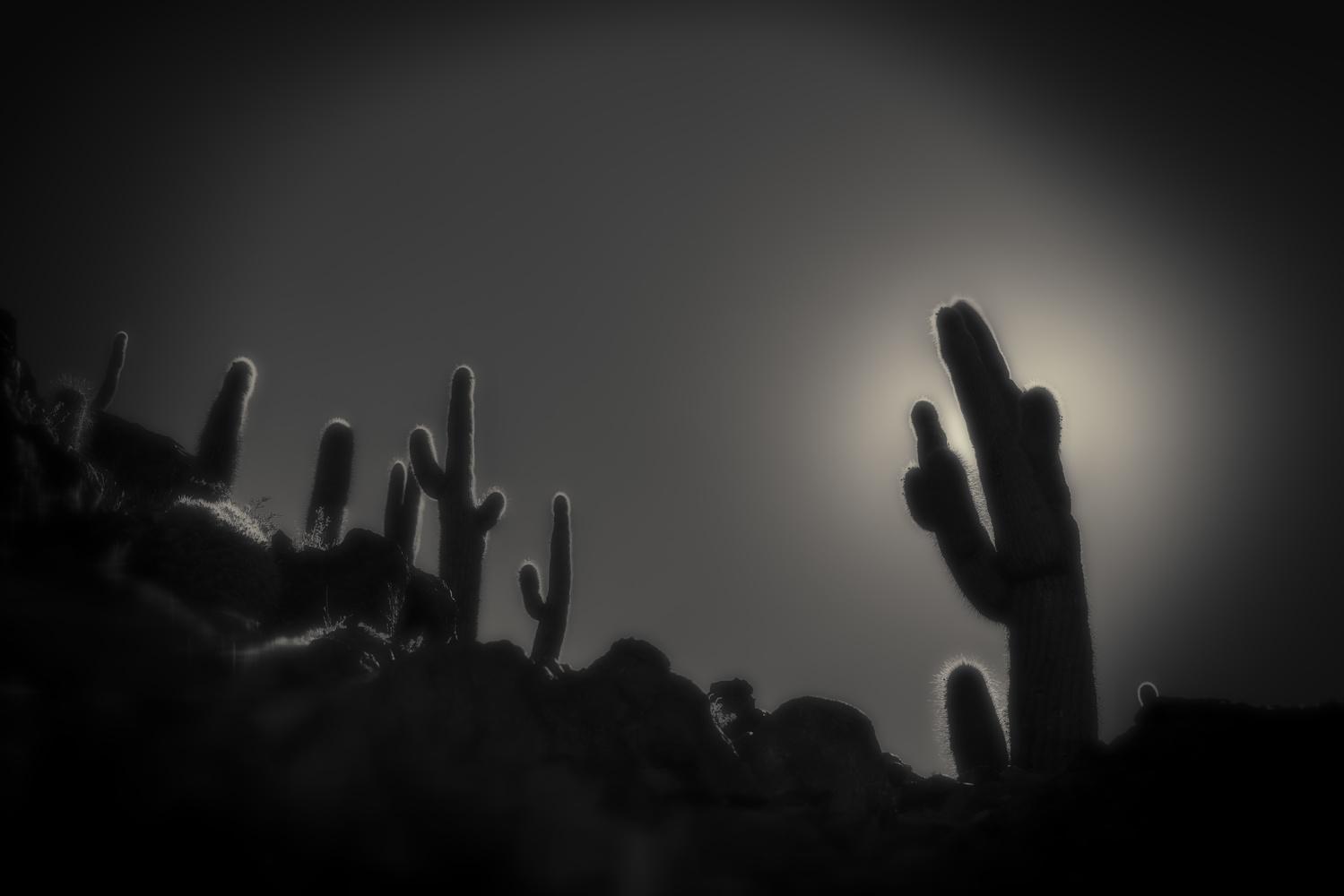 Desert Silhoutte by Gary Horsfall