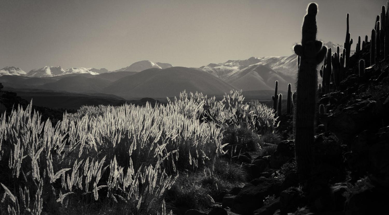 Untitled Bolivia by Gary Horsfall
