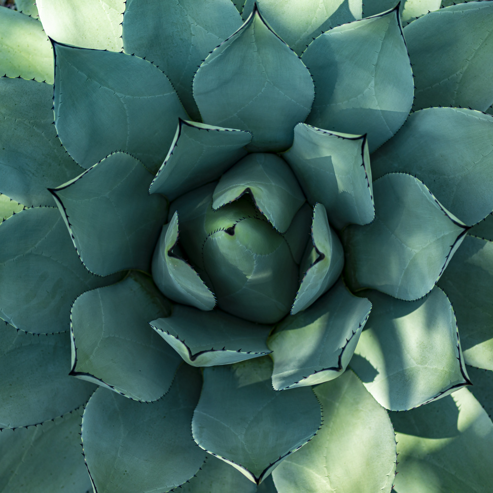 Succulent Bloom by Gary Horsfall
