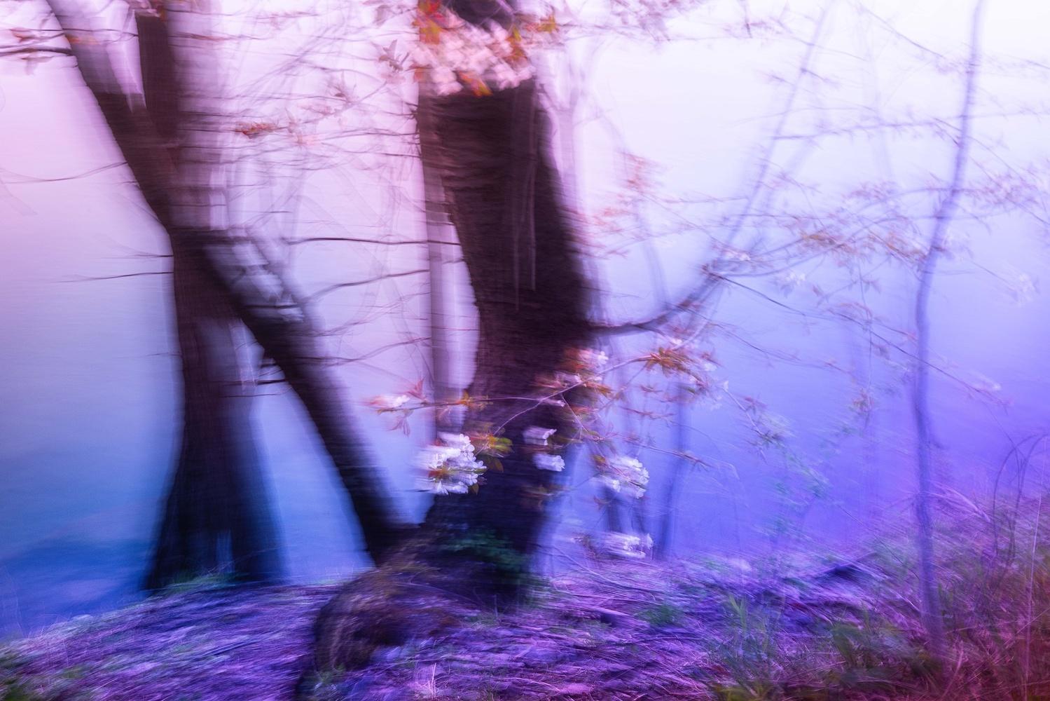 Untitled 22 by Adam Vollick