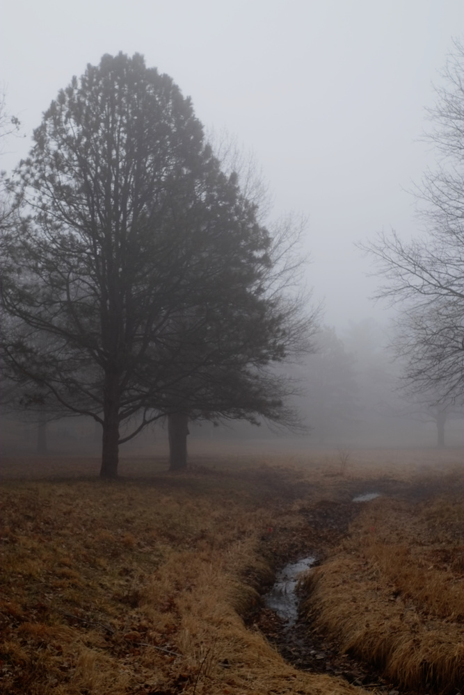 Tree and Stream in Fog by Andy Peterson