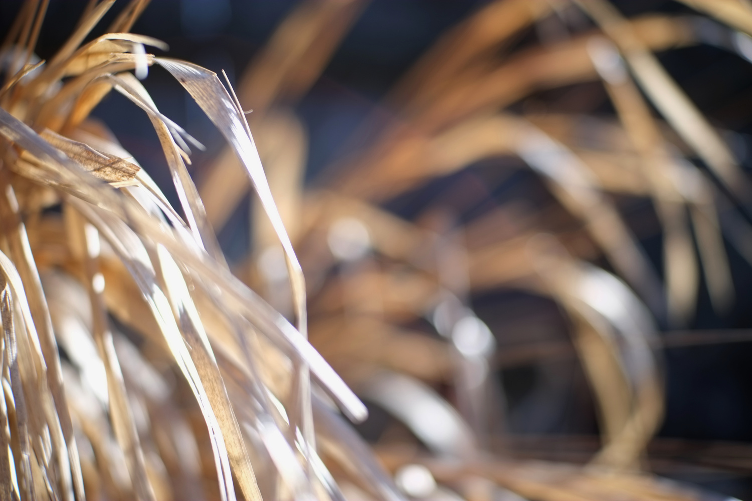 Arc Light in Grass by Andy Peterson