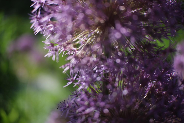 Purple Flower Haze by Andy Peterson