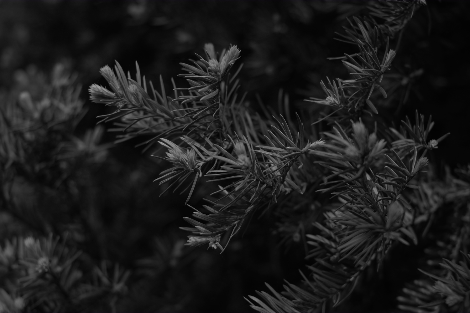 Hedge Detail BW by Andy Peterson