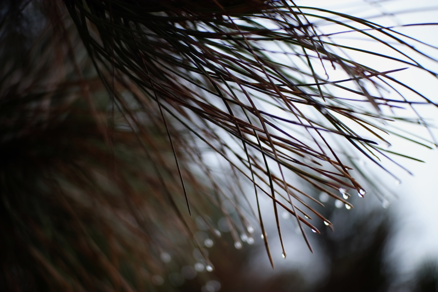 Needles and Droplets by Andy Peterson
