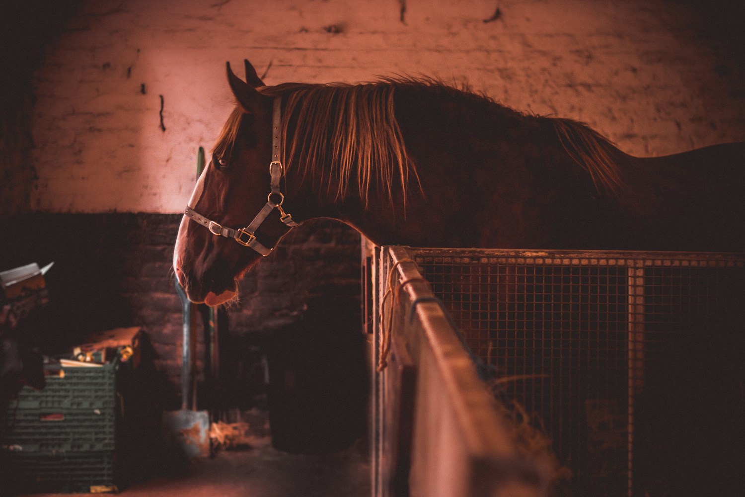 Horse in Stable by Phil Daley