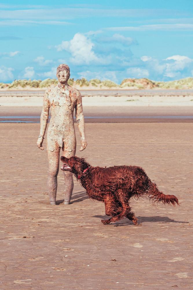 Beach Irish Setter 3 by Phil Daley