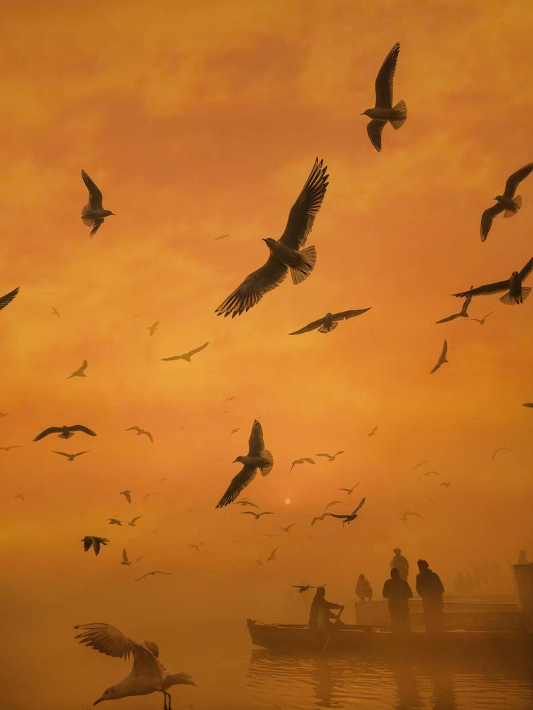 fly high by Ritu Rawat