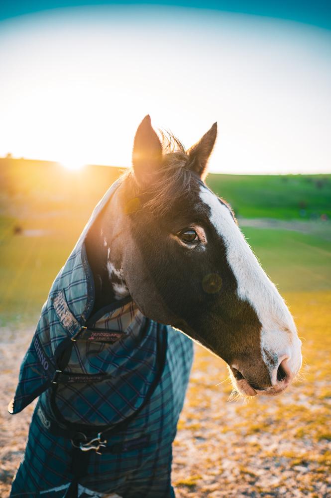 Wild Horse in Sunset by Oszkar Csaba Gyorfi