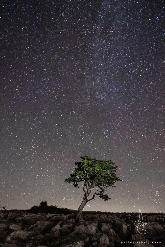 Lone Tree with Meteor by Imran Mirza
