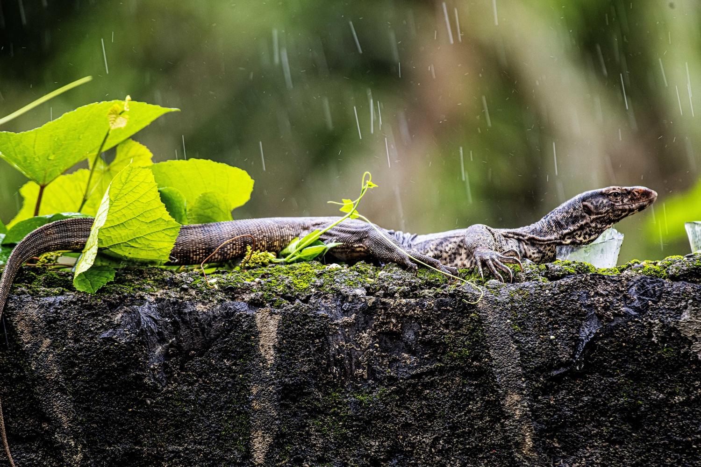 Enjoying the Monsoon! by Sameer Bhalekar