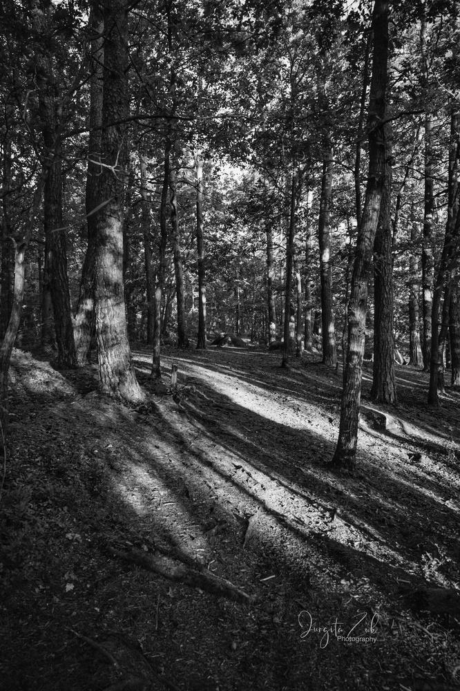 Shadow forest by Jurgita Zuk