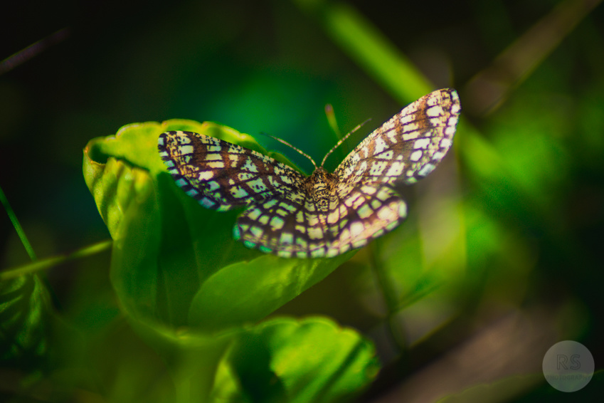 Butterfly on a leaf by Rob South