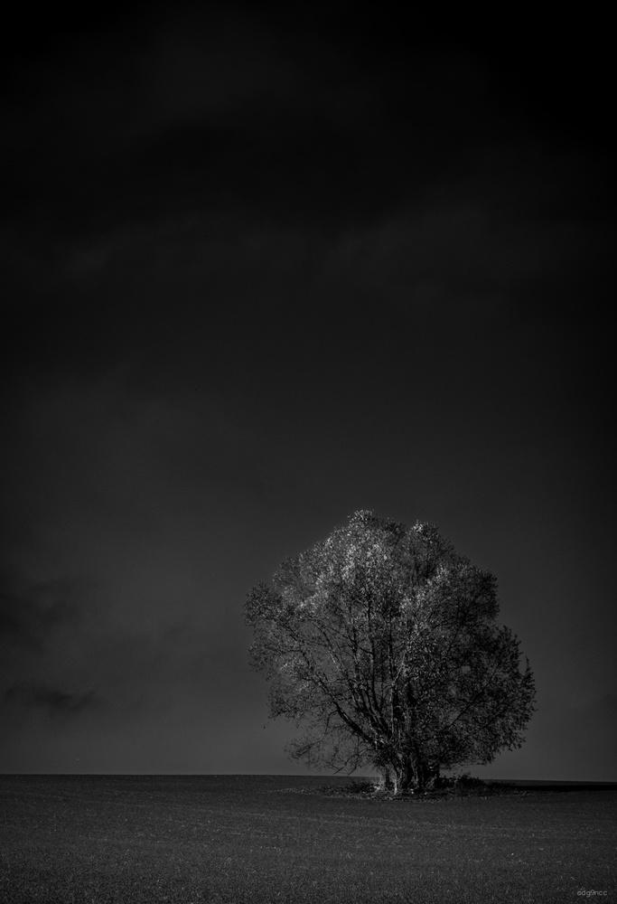 Autumn Tree by Dg9ncc /portable