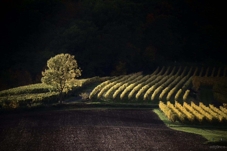 tree & wine by Dg9ncc /portable