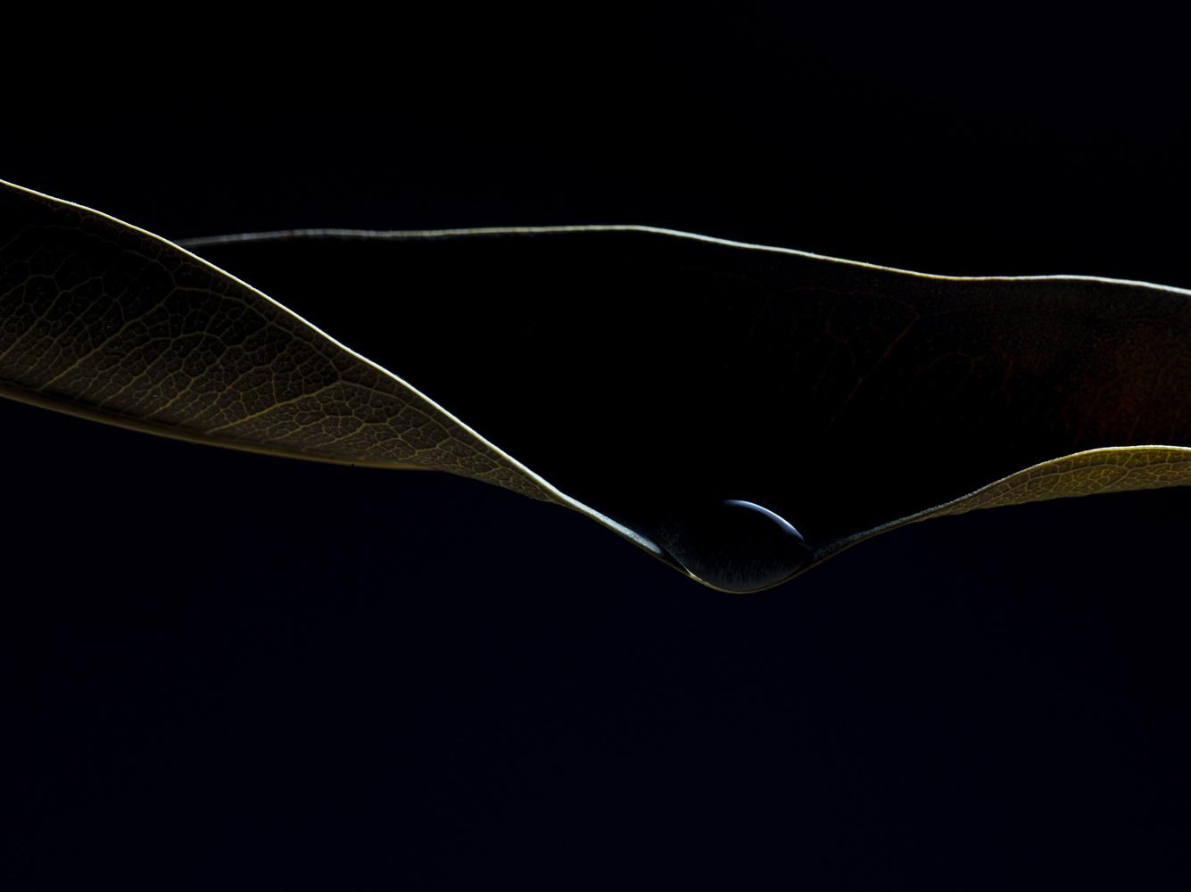 Light and dark by Attila Michael Zsaki