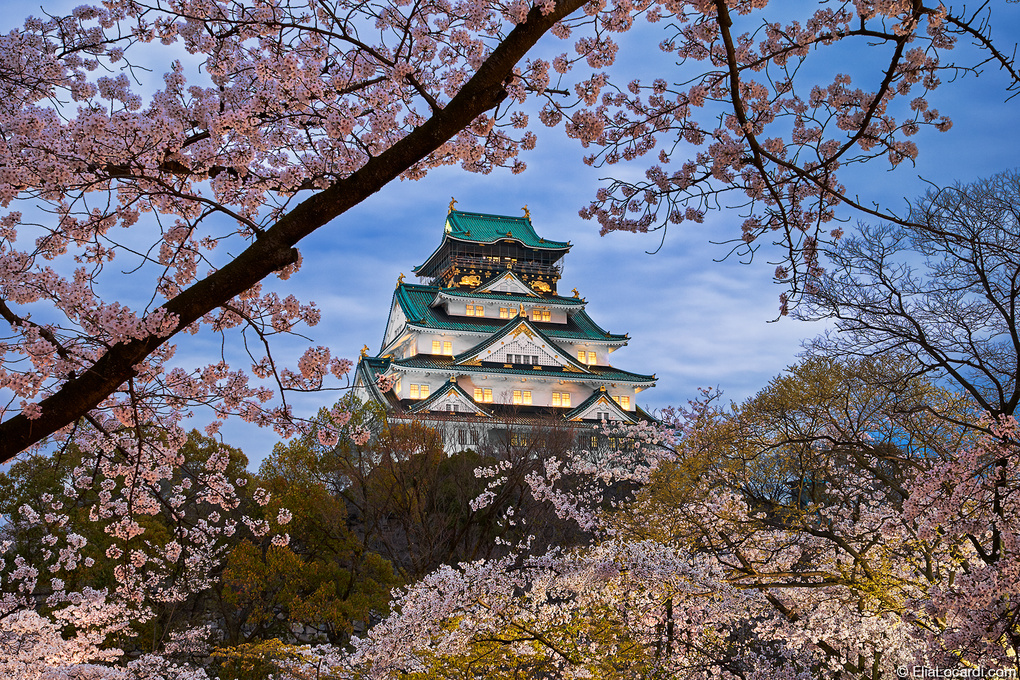 The Harmony of Japan by Elia Locardi